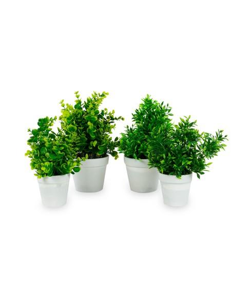 Διακοσμητικό φυτό πρασινάδα σε πλαστικό γλαστράκι